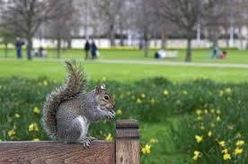 green park squirrels